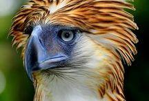 BIRDS - Other eagles / by Jean-Daniel CHRISTIN