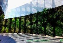 Jardines verticales Uruguay - Edificio Celebra, Montevideo / En agosto de 2014 se finalizó la construcción del jardín vertical más grande de Uruguay. Con casi trescientos metros cuadrados en una superficie de 52 metros de largo por cuatro y medio de altura, este ecosistema vertical filtrará más de 165 toneladas de gases anuales y producirá el oxígeno necesario para que respiren 255 personas, al tiempo que atrapará unos 130 kilos de polvo al año.