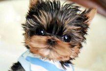 Own... So cute!