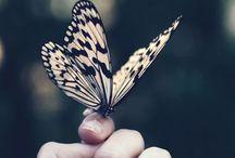 Love, peace and beauty / Pequenas coisas que mudam nosso dia!