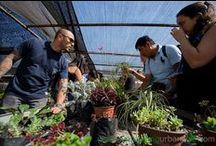Curso de jardines verticales en Chile 2015