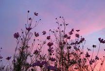 {insp}flora / i really want a garden