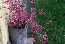 FLOWERS KVĚTINY PRO VŠECHNY