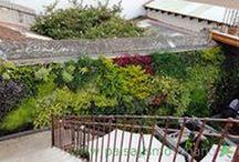 Restaurante en Antigua - Jardín vertical en Guatemala / Este jardín vertical de la zona de Antigua (Guatemala) tiene una superficie de 30 metros cuadrados. El proyecto se realizó a finales de 2015, fruto de la colaboración entre Paisajismo Urbano y By Botanik.