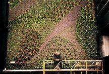 Jardín vertical en Valencia (España) - Maskokotas / Este jardín vertical interior está situado en la tienda de alimentación de animales domésticos Maskokotas, en Valencia (España), y mide casi 40 metros cuadrados. Para su construcción fueron necesarias más de 1.000 plantas.