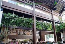 San Martin Zona 10 - Jardines verticales en Guatemala / En 2016 se construyó este proyecto de jardinería vertical. Se trata de dos jardines verticales que suman 50 metros cuadrados, y están ubicados en el restaurante San Martín de la Zona 10 de Guatemala. En su ejecución se utilizaron más de 1.500 plantas de 25 especies. El proyecto es fruto de la colaboración entre By Botanik y Paisajismo Urbano.