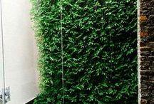 Jardín vertical interior en Colombia - Apartamento privado en Alameda / Este jardín vertical interior fue realizado en Bogotá por Groncol, la franquicia colombiana de Paisajismo Urbano. El proyecto mide 31 metros cuadrados, y en su ejecución se emplearon más de 900 plantas de cuatro especies diferentes.