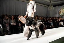 On the Runway / Models and pups strutting their stuff.