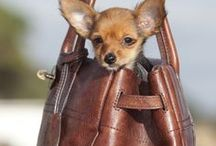 Luxury Dog Purses / Carry your dog around in this seasons most fashionable dog purses.