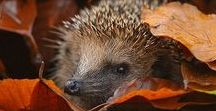 Zvířata - Animals / - fotky různých druhů zvířat
