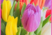 Lente -  Spring