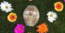 H E D G E H O G / All about the cactus potatoes - Hedgehog!!!