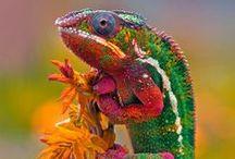 les beautés de Madagascar