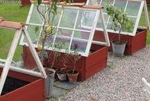 Trädgård -växter och odling