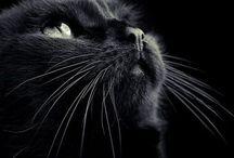 Kediler Atlar