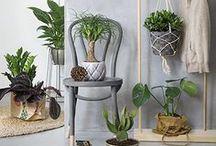 Green plants indoors