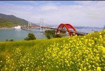 아름다운 보물섬 '남해' / 맛과 멋이 가득한 곳! 보물섬 남해의 모든 것!