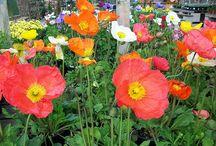 FLOWERS / by behavior savior