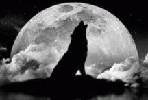 Wolfs, Wolven
