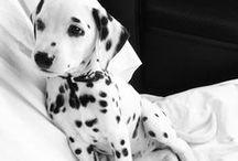 Too Cute / The cutest of cute ... #JohnnyLovesRosie
