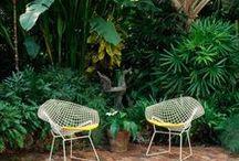 Mid century garden