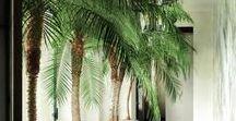 Mediterranean Living Space / Inspo for creating that indoor/outdoor garden feel