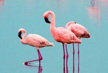 Flamingo / Black Atlass  (Alex Fleming)