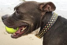 Dogs Wearing our Collars / Pictures from our customers wearing various designs.