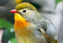 AVES / Pássaros, aves aquáticas, aves marinhas, aves de rapina, aves domésticas. / by Gláucia Wataya