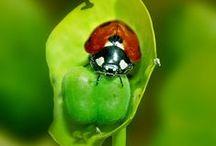 PEQUENOS ANIMAIS e outros não tão pequeninos / Anfíbios, répteis, aracnídeos, crustáceos, insetos, moluscos. / by Gláucia Wataya