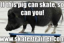 Animals on Skateboards  / #skatertrainer loves animals! What could be cuter that adorable furriness on skateboards! #skateboard #cuteanimals