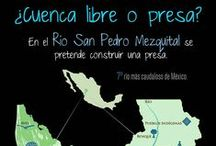 Infografías / #Conservación y Medio Ambiente, #Sostenibilidad, Desarrollo Rural y Social, Inteligencia de Mercados, Indicadores, Política Pública.