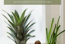 Grow Your Own / Fruits, veggies and herbs are all important in our diets, but have you ever considered getting creative and growing your own? It needn't be time consuming or complicated -- and you can even regenerate certain plants from leftover scraps!