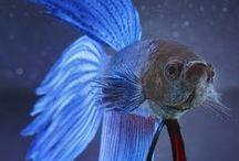91 Fish