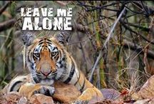 Protect Tigers