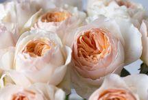 Цветы/Flowers / About flowers