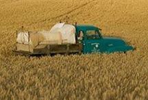 Lakókocsi - Vintage trailer