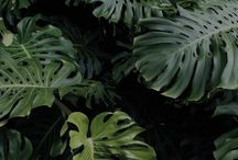 Minimal. / Minimalism for lover palm tree