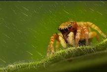 Jumping spiders - South China / All types of cute jumping spider (Salticidae) I find on my way