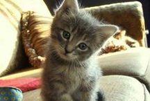 Crazy Cats / Cats, Katzen