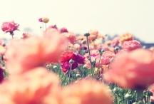 Pretty Pictures / by Amanda Ius