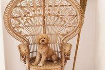 pets in interiors