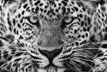 Animals. / Amazing shots from all around the world.