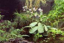 aquascapes! / aquariums, palladiums, aquatic plants, terrariums
