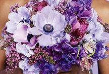 Wedding Bouquets Perfect Purple / by Kaitlin Kozlowski