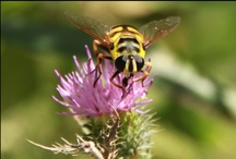 Insects / by Public Domain Photos