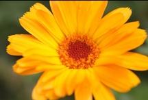 Flowers / by Public Domain Photos