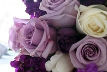 Lavender & Lilac / by Pink Frosting
