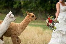 Casie Zalud Wedding Photographer