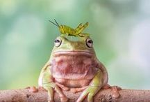Fabulous Frogs / Slimy, yet adorable. Just one of the things we could add to a Bio Bubble!